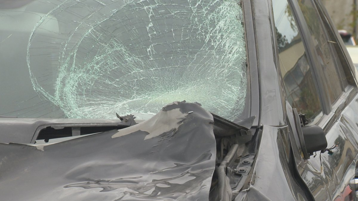 The driver of this vehicle didn't see a dark horse on the road in time and fatally struck the animal Thursday evening.