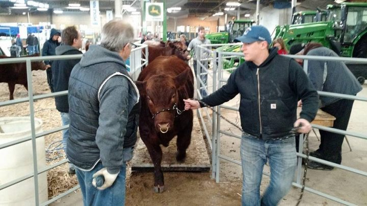 Canadian Western Agribition announced, in response to restrictions and recommendations surrounding COVID-19, its 50th show is being postponed until 2021.
