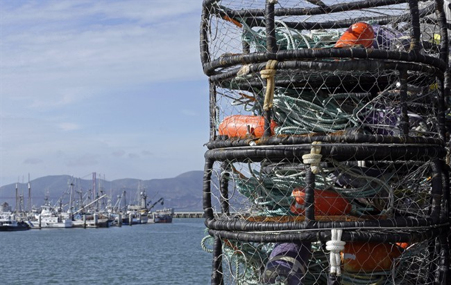 The Department of Fisheries and Oceans is shutting down snow crab season.