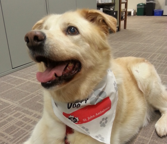 One of the dogs that will be a part of the airport's dog therapy program.