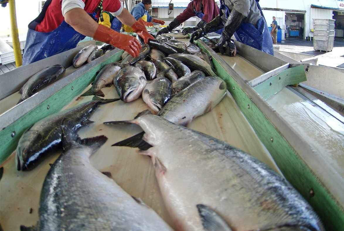 Prince Rupert's largest cannery closing; 500 jobs in jeopardy - image