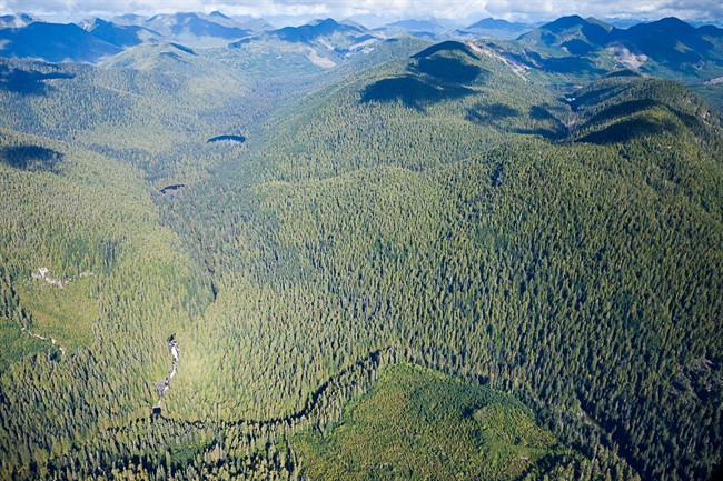 An aerial view of B.C.'s Walbran Valley is shown in a handout photo. Business leaders in Port Renfrew, B.C., a community that once thrived on forestry, are calling for a ban on logging the nearby Walbran Valley.