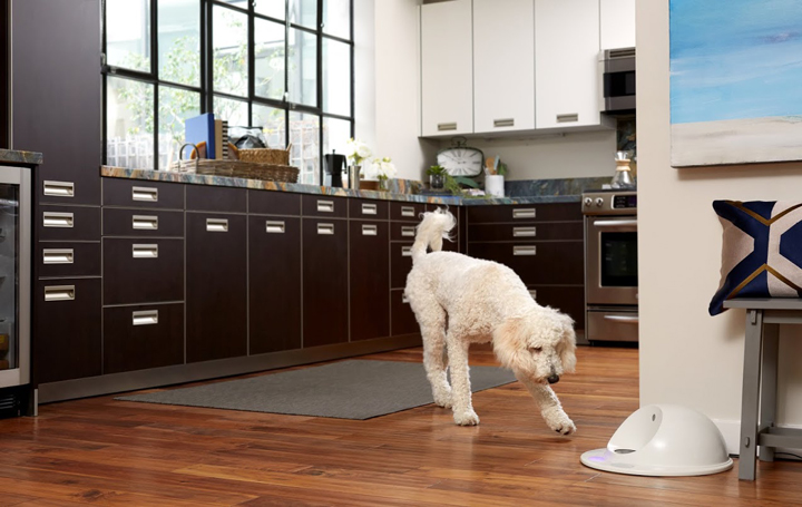 Ever wonder what your dog does when they're home alone? Now you can make sure they are entertained (and not getting into trouble) with CleverPet, which is basically a gaming console for dogs.