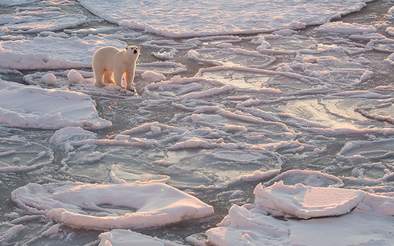 Injured Inuit hunters huddled for 3 days after polar bear killed friend - image