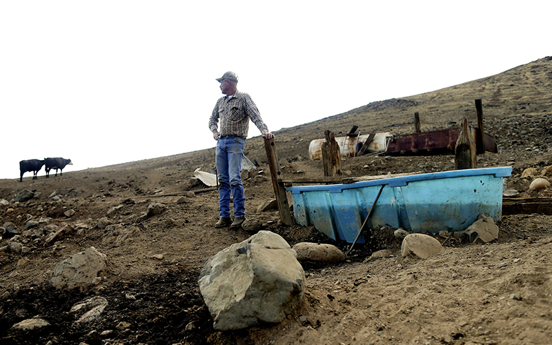 A rancher looks toward his cattle grazing on a barren hillside in drought-stricken Tulare County, Calif.