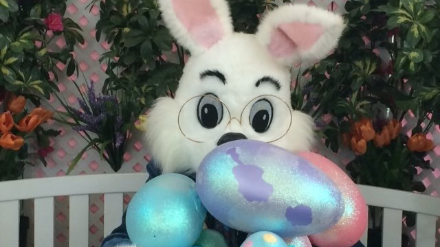The Town of Slave Lake deems the Easter Bunny an essential worker during COVID-19 pandemic.