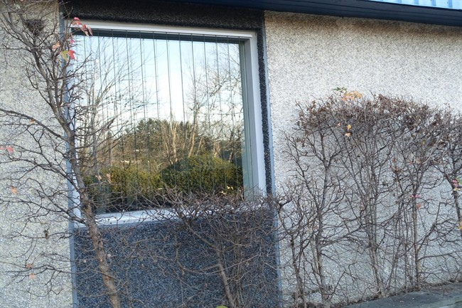 Hundreds of millions of birds die each year flying toward the trees and bushes they see reflected in the glass.