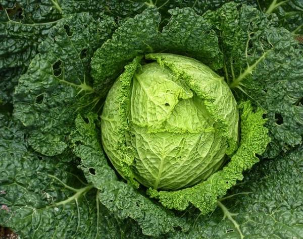 Cabbage is one of several foods that promote liver health.