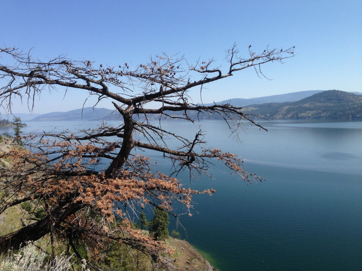 Cash grants for Okanagan water protection projects - image