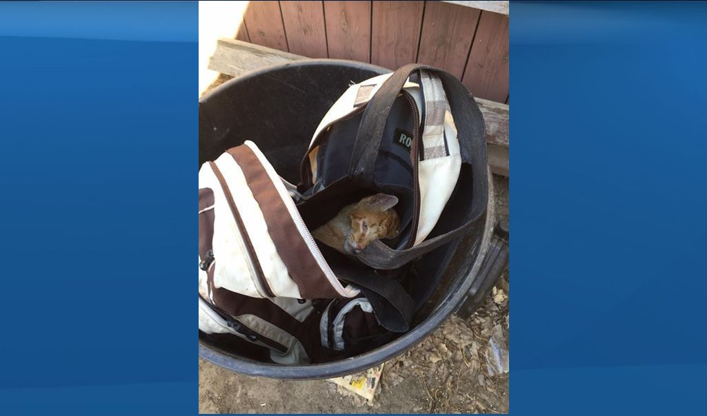 A cat was found in a bag inside a backpack in a garbage can in Red Deer in 2016.