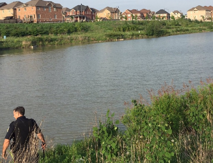 Officers completed a search for an apparent baby alligator on the loose in Brampton on May 26, 2016.