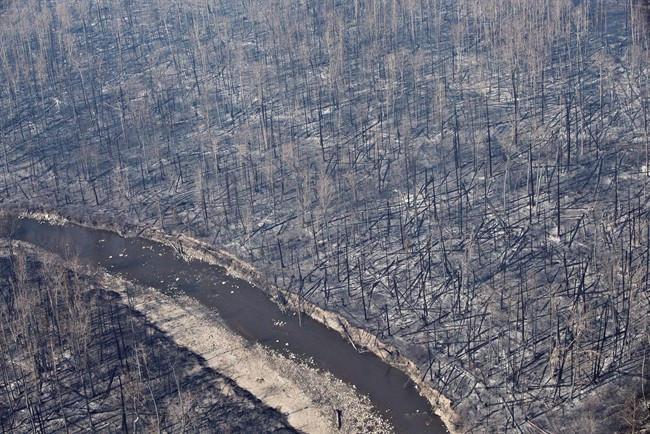 Burnt out trees are shown in Fort McMurray, Alta., in a May 13, 2016, file photo.
