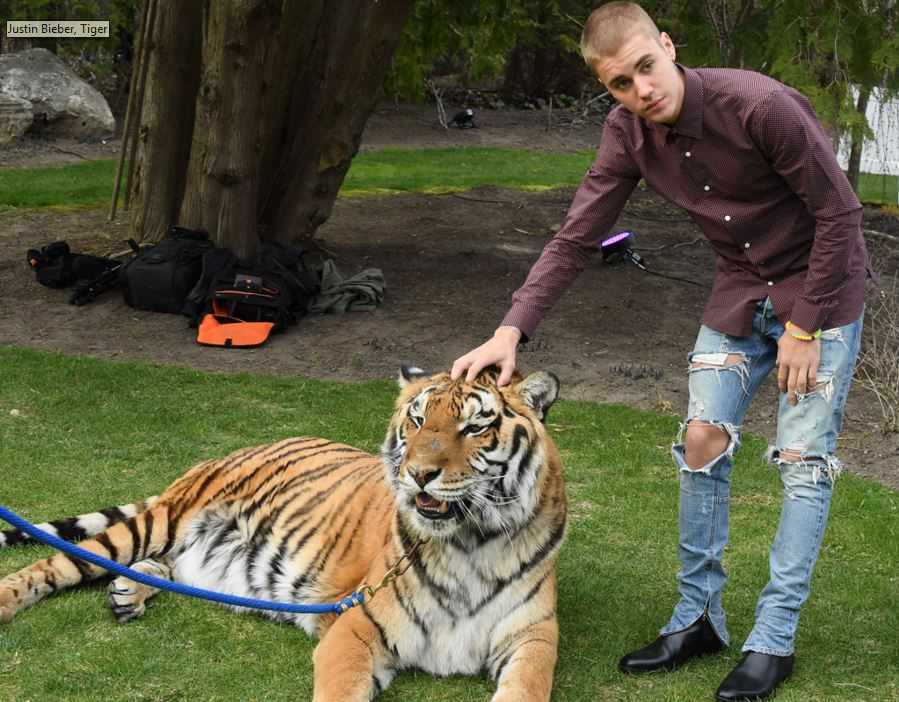 Justin Bieber with tiger