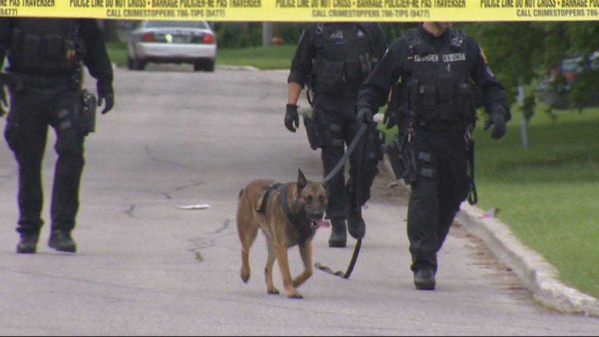 The Winnipeg Police Service K9 unit checking a crime scene.