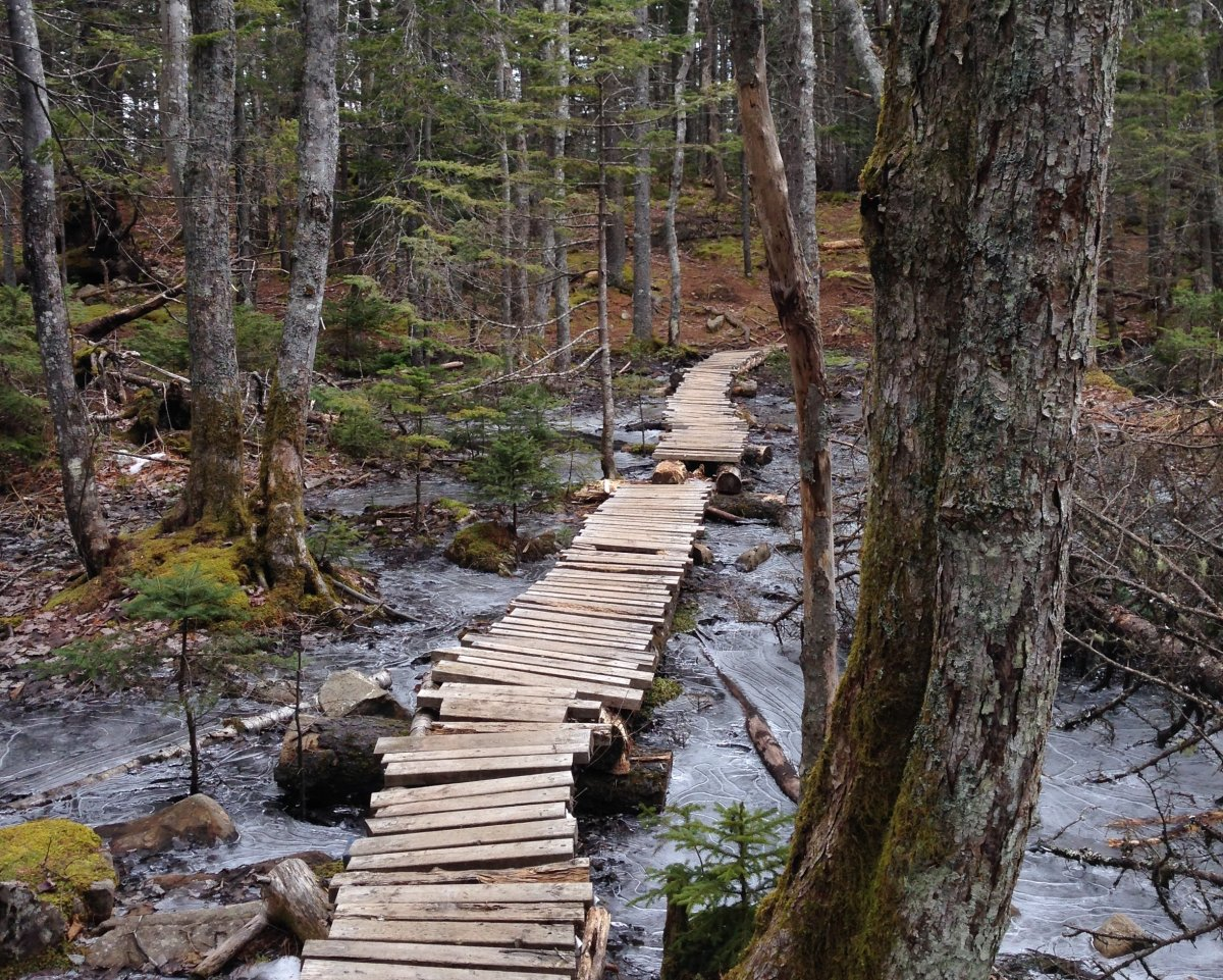 File - The Government of Canada has provided the Halifax Regional Municipality with $860,000 to purchase 135 hectares of urban wilderness.