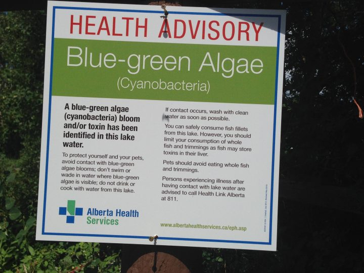 A blue-green algae warning has been issued for the Pine Coulee Reservoir.
