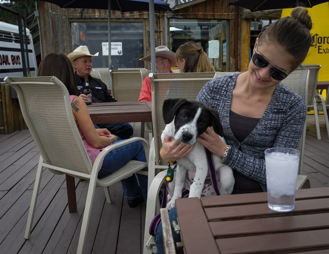 Amber Wyers, right, with her puppy Harley, a three-month-old Border Collie Lab cross, relax on the Ranchman's Cookhouse patio in Calgary, Alta., Saturday, June 18, 2016.