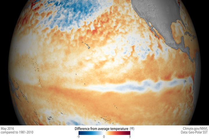 This illustration shows a cooling in the Pacific Ocean, signalling an end to the monster El Niño of 2015–2016.