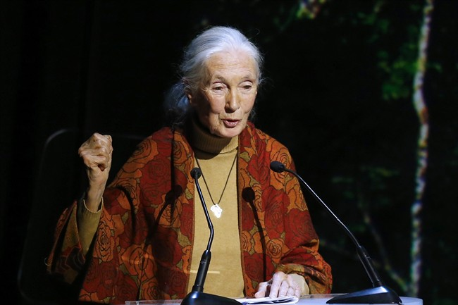 In this Dec. 7, 2015, file photo, primatologist and conservationist Jane Goodall delivers her speech during The Equator Prize Award ceremony at Theatre Mogador, in Paris.