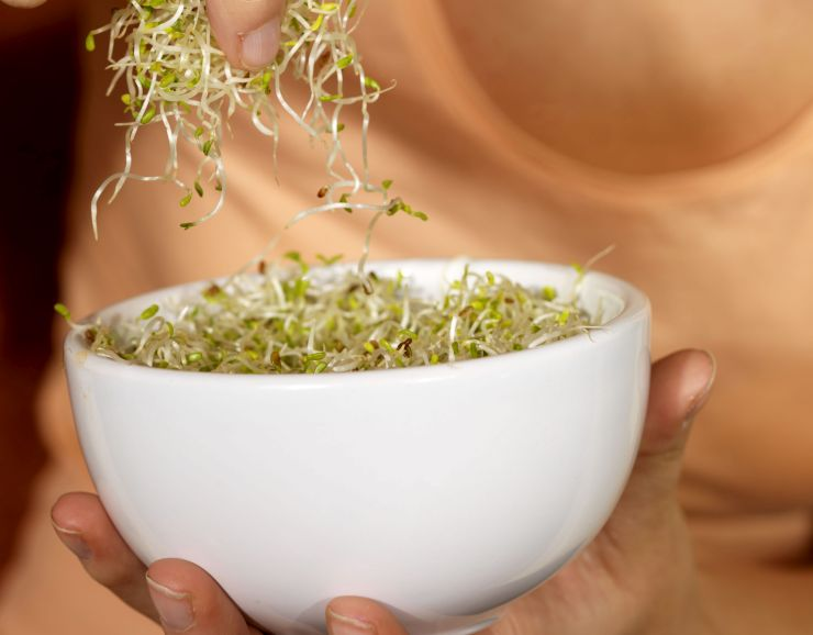 Mandatory Credit: Photo by Martin Lee / Rex Features ( 819701bd ) Model Released - Young Woman Eating Alfalfa Sprouts Various - 2008