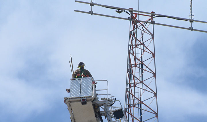 A tangled falcon was rescued Friday by crew members with the Saskatoon Fire Department.
