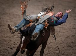Continue reading: Montreal urban rodeo to go ahead after activists drop legal bid to block it