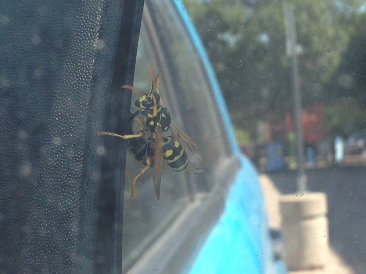 August is often when wasps are most noticeable in Manitoba.