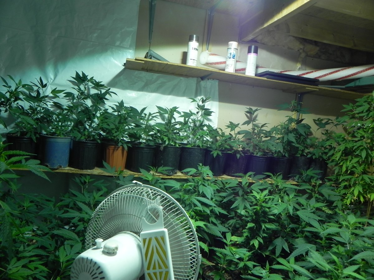 Two Manitobans have been charged with drug offences after RCMP busted a marijuana grow up in Lorette, Man.