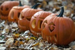 Continue reading: What to do this Halloween weekend in the London, Ont., region