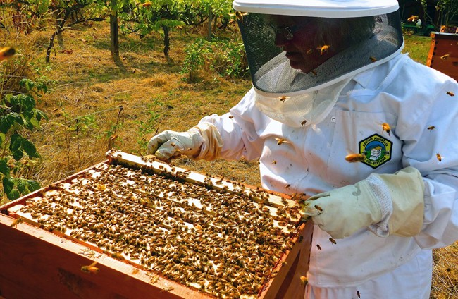 Beekeepers are worried about market prices in the U.S.