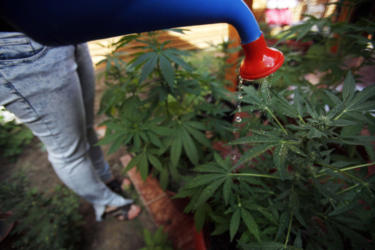 Growing your own pot is easy for householders to do, and hard for governments to regulate.