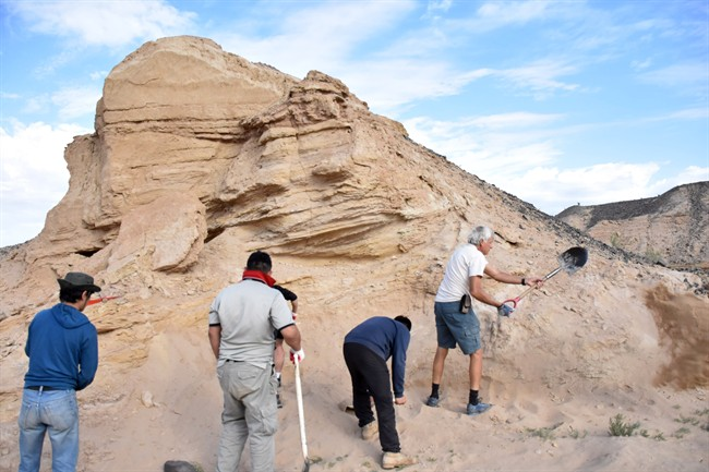 Phil Currie, right, and some of the Mongolian crew working on the site in Mongolia in this undated handout image provided by the University of Alberta. A ancient bone bed in a remote Mongolian desert presents tantalizing clues that dinosaurs of a feather may flocked together for the same reasons modern birds do.