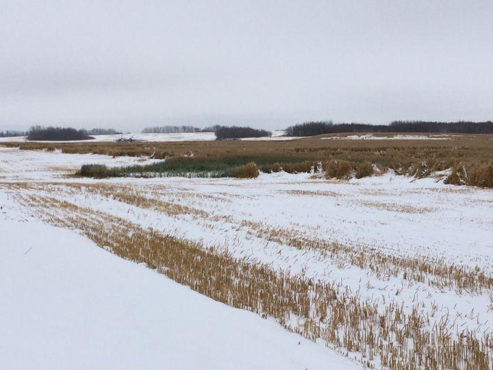 2016 Saskatchewan harvest grinds to a halt as rain, snow keeps farmers out of the field.