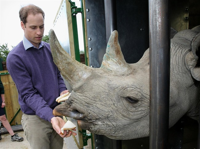 In this Wednesday June 6, 2012 file photo Britain's Prince William feeds a black rhino called Zawadi as he visits Port Lympne Wild Animal Park in Port Lympne, southern England.