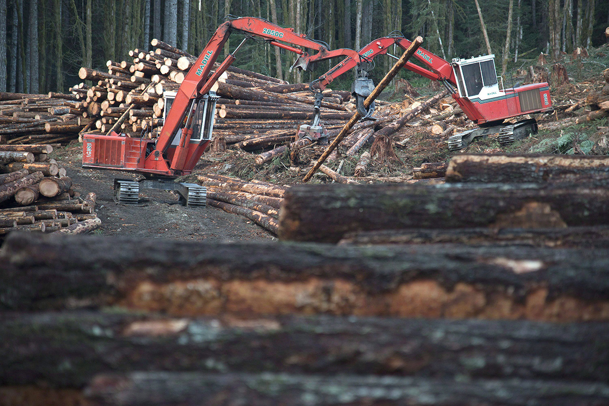 A section of forest is harvested by loggers near Youbou, B.C. Wednesday, Jan. 14, 2015.