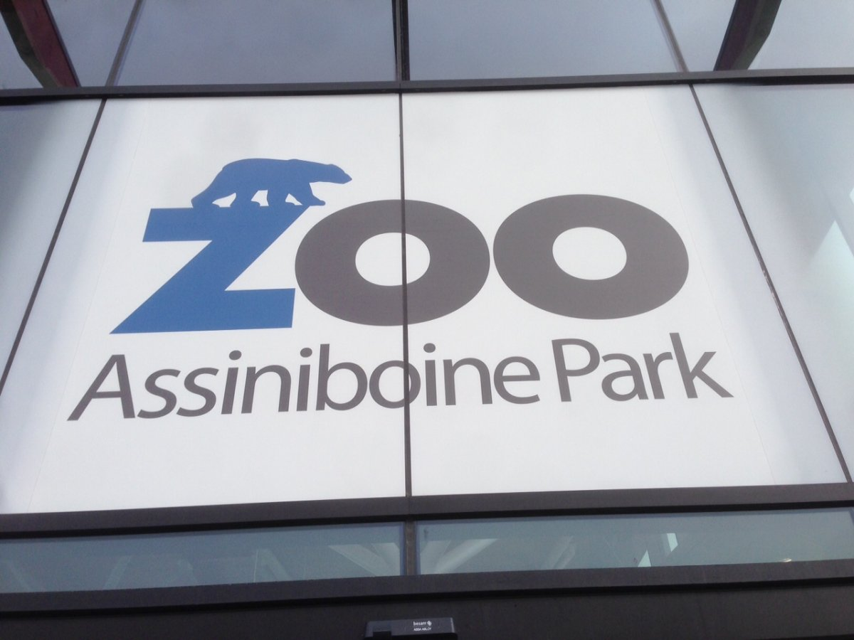 Assiniboine Park Zoo open to members Sunday, full opening Tuesday - image