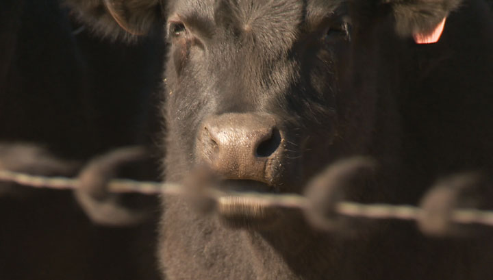 The Saskatchewan Stock Growers Association says a ranch in the southwestern part of the province is under quarantine.