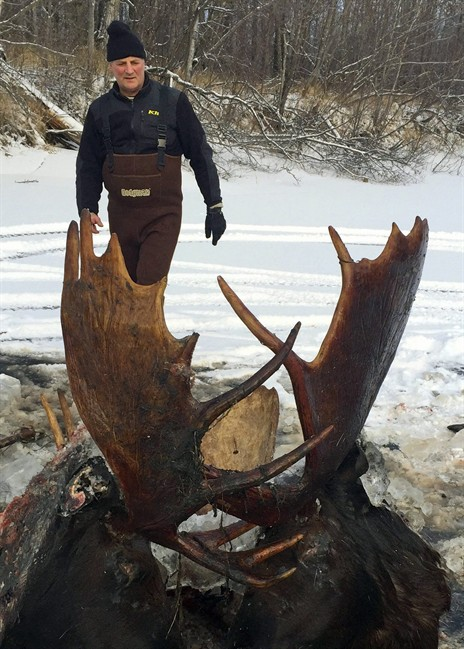 This Nov. 12, 2016 photo, provided by Jeff Erickson shows two moose frozen mid-fight and encased in ice near the remote village of Unalakleet, Alaska, on the state's western coast. Two moose were recently discovered. The unusual discovery was made Nov. 2, by a Unalakleet teacher showing a friend around a slough at a bible camp where the teacher is a volunteer camp steward.