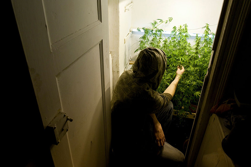A man tends marijuana plants at a home in Germany in this file image.