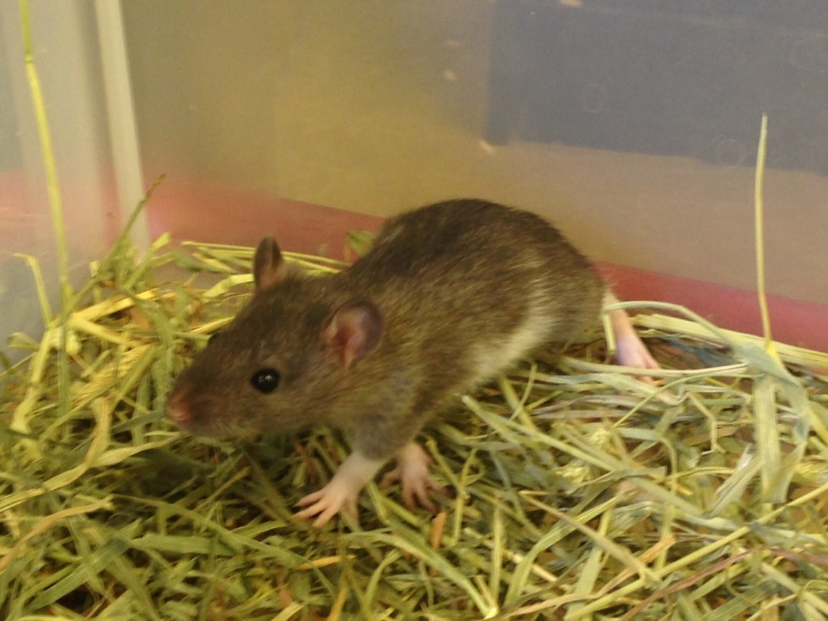 The warm fall has given rodents more time to prepare for winter.