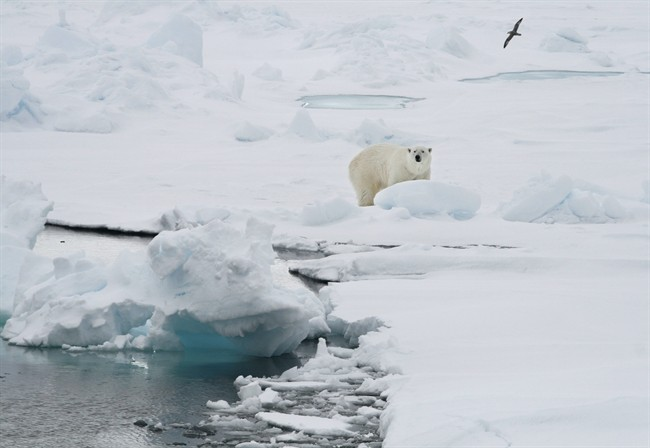 In this Friday June 13, 2008 file photo, a polar bear stands on an ice floe near the Arctic archipelago of Svalbard, Norway.