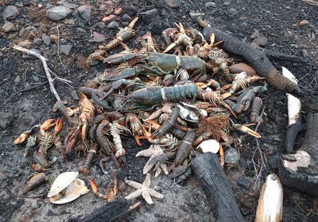Dead sea creatures are shown washed ashore in Savary Provincial Park near Digby, N.S. on Monday Dec. 26, 2016 in this image provided by Eric Hewey. A retired scientist says photos showing lobsters, starfish and clams washed ashore in western Nova Scotia could be linked to tens of thousands of herring in St. Mary's Bay.