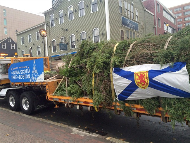 A transport truck heads from downtown Halifax with a Christmas tree bound for Boston on Wednesday, Nov. 16, 2016.