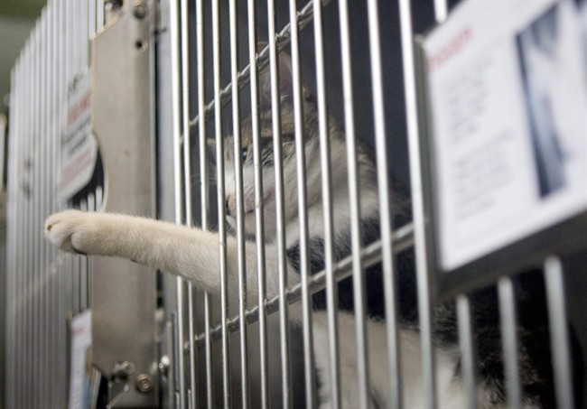 The Ontario Society for Prevention of Cruelty to Animals says animal welfare groups in Kenora, Ont., took 50 cats from a shelter in the northern city and drove them to Wawa, Ont., where they were met by a team from the Welland and District Humane Society.