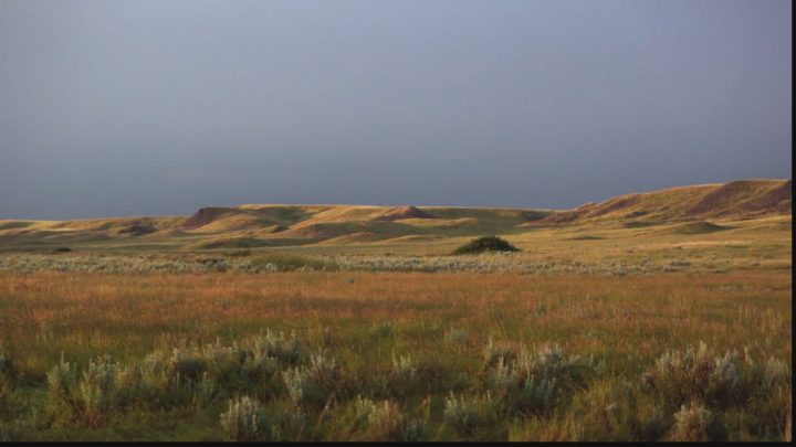 Protecting Saskatchewan's grasslands is the drive behind Field of Dreams: Let's do something together with our SGI rebate.