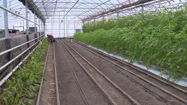 Calgary-area Hotchkiss Herbs and Produce.