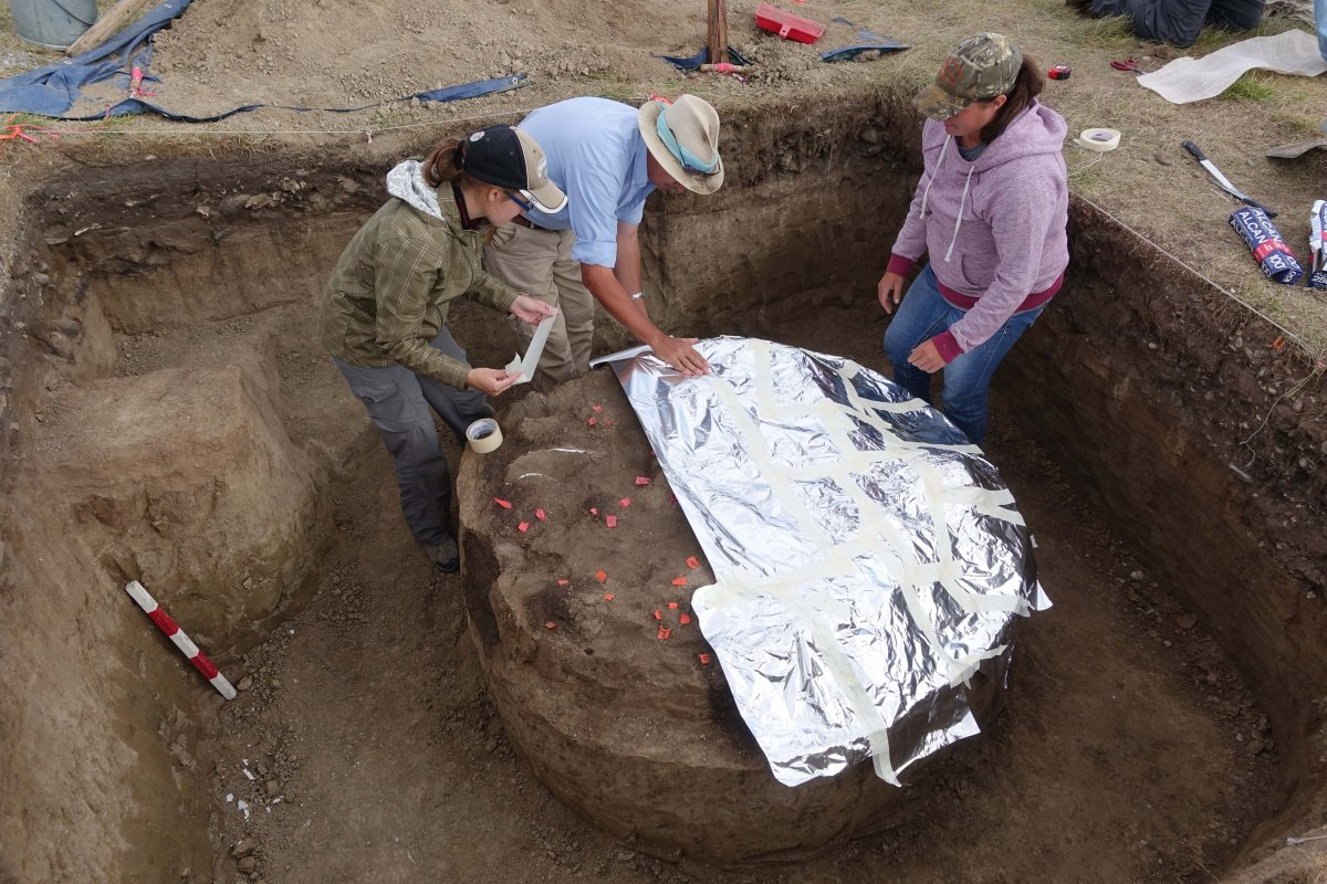 Royal Alberta Museum archaeologists dug up a 1,600-year-old roasting pit at Head-Smashed-In-Buffalo Jump in southern Alberta. This photo shows the preservation of the pit and plaster jacketing being started.