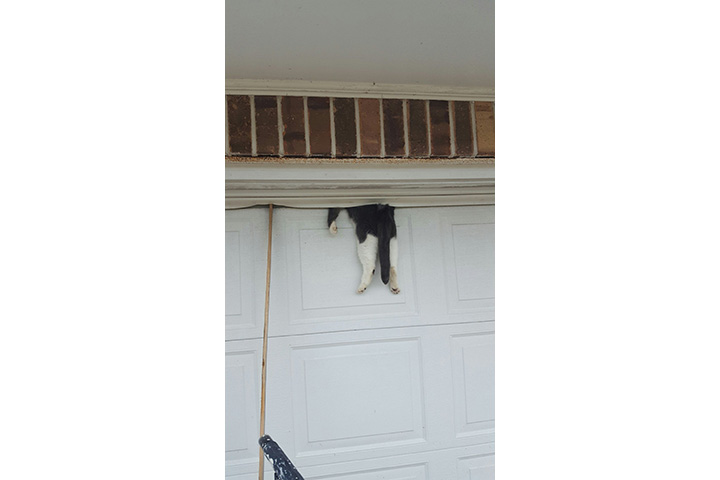 """According to a statement from the Ascension Parish Sheriff's Office, Deputy Mike Scott responded to a call to for an """"animal being stuck in a residence"""" on Dec. 29."""