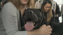 Continue reading: Popular fundraiser for SPCA doles out cupcakes and cuddles in Vancouver