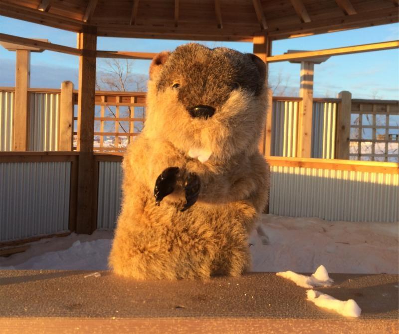 Manitoba Merv predicted six more weeks of winter.